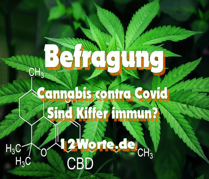 http://12worte.de/cannabis-contra-covid-sind-kiffer-immun/